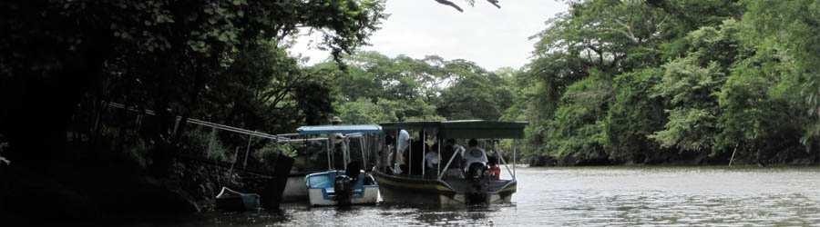 Damas Mangrove Night Boat Tour Costa Rica Tours