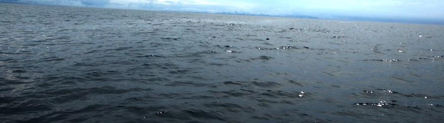 33' Private Sport Fishing Charter