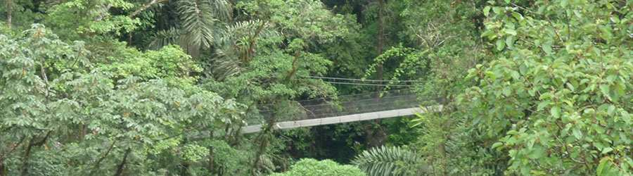 Heliconias Hanging Bridges & Rainforest Hike