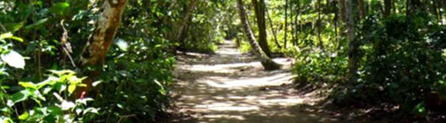 Hiking Excursion In Cahuita National Park Costa Rica