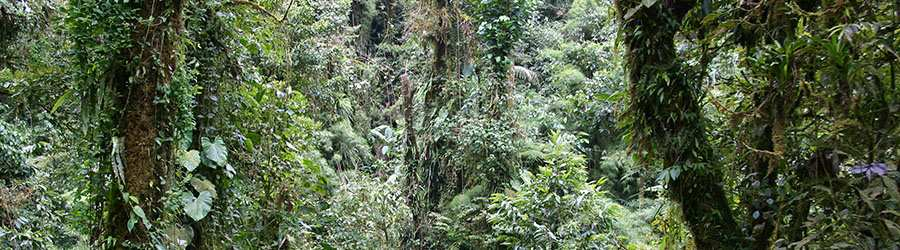 Monteverde Cloud Forest Experience