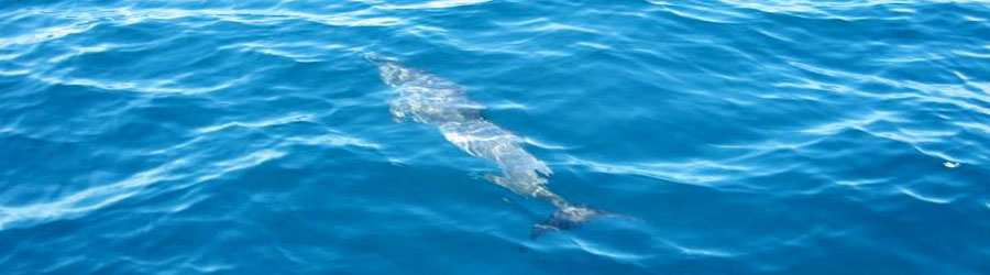 Private Dolphin and Whale Watching Charter