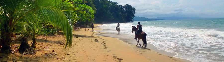 Punta Uva Beach Horseback Riding Tour