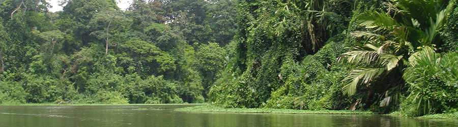 Tortuguero 2 Day Expedition