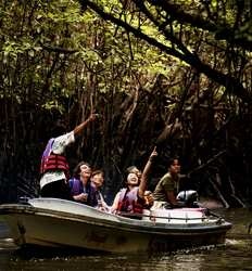 Damas Mangrove Night Boat Tour