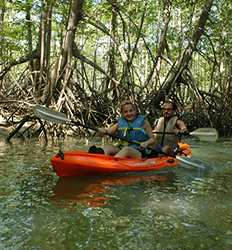 Half Day Kayak Damas Mangroves