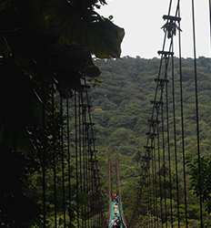 Monteverde Hanging Bridges Tour