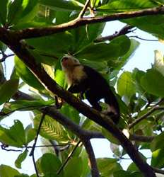 Hiking Tour in Cahuita National Park
