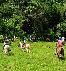 Jungle & Waterfall Horseback Riding Tour