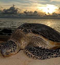 Sea Turtle Nesting Night Tour