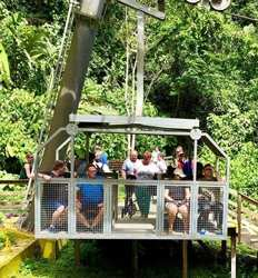 Rainforest Aerial Tram, Rainforest Walk & Cultural Tour