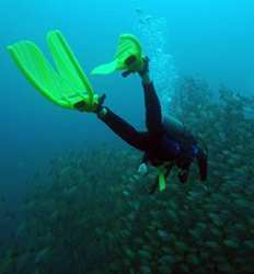 SSI or PADI Open Water Diver Certification