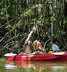 Tamarindo Mangroves & Estuary Kayak Tour