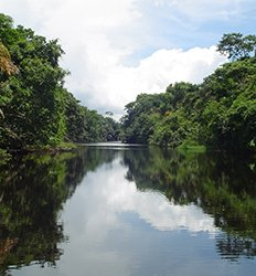 Banana Plantation + Tortuguero One Day Tour