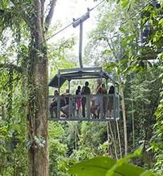 Veragua Rainforest Aerial Tram and Trails Tour